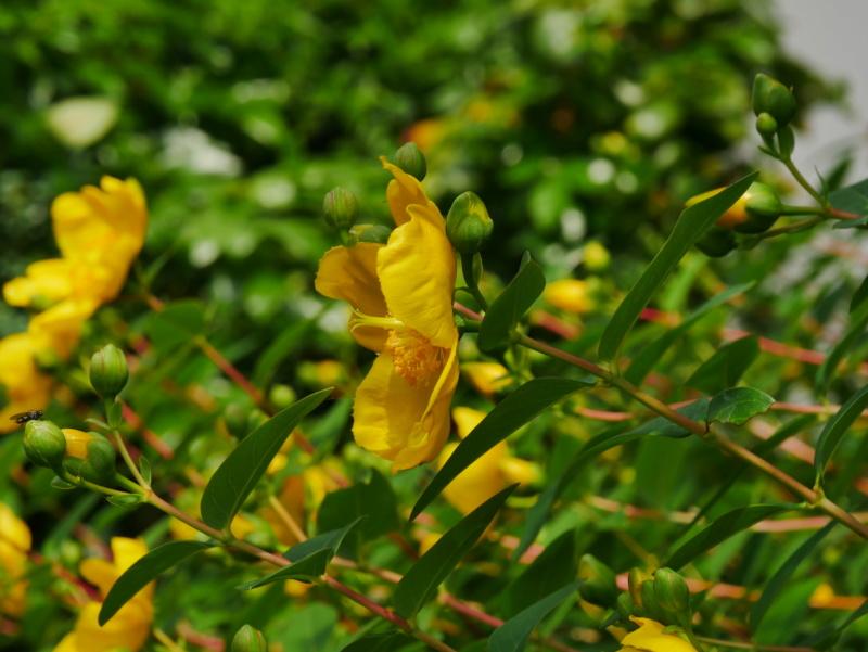 Allez un pti jaune P1040426