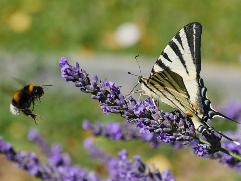 Etrange papillon P1040813