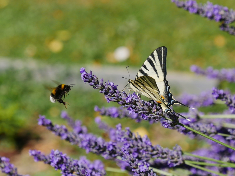 Etrange papillon P1040817
