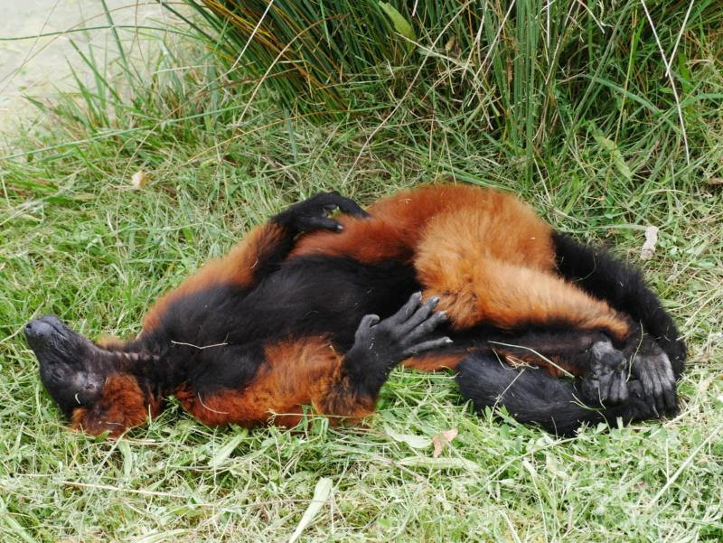 C est la sieste(vallée des singes) P1050110