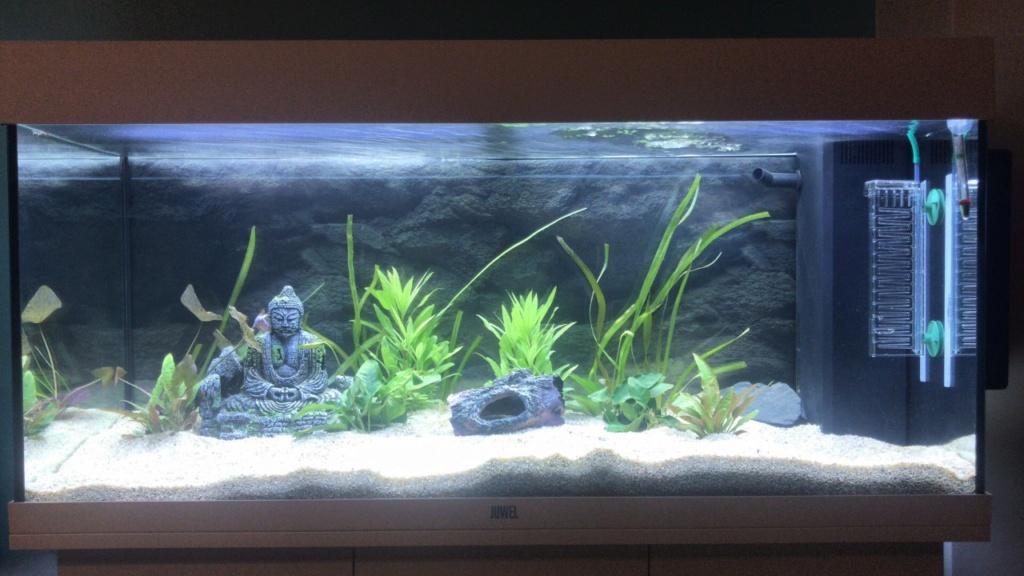 Nouvel aquarium - mes plantes dépérissent Thumbn10