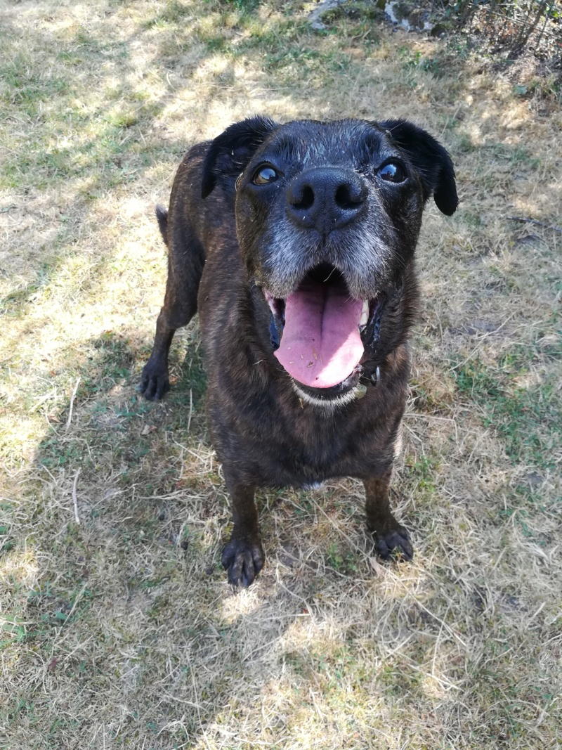 TEX (boxer X berger allemand) - Page 2 Img_2019
