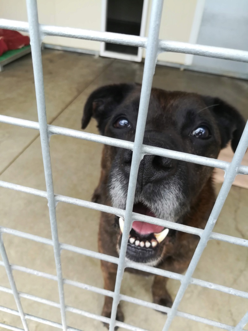 TEX (boxer X berger allemand) - Page 2 Img_2021