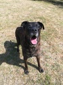 TEX (boxer X berger allemand) - Page 2 Img_2011