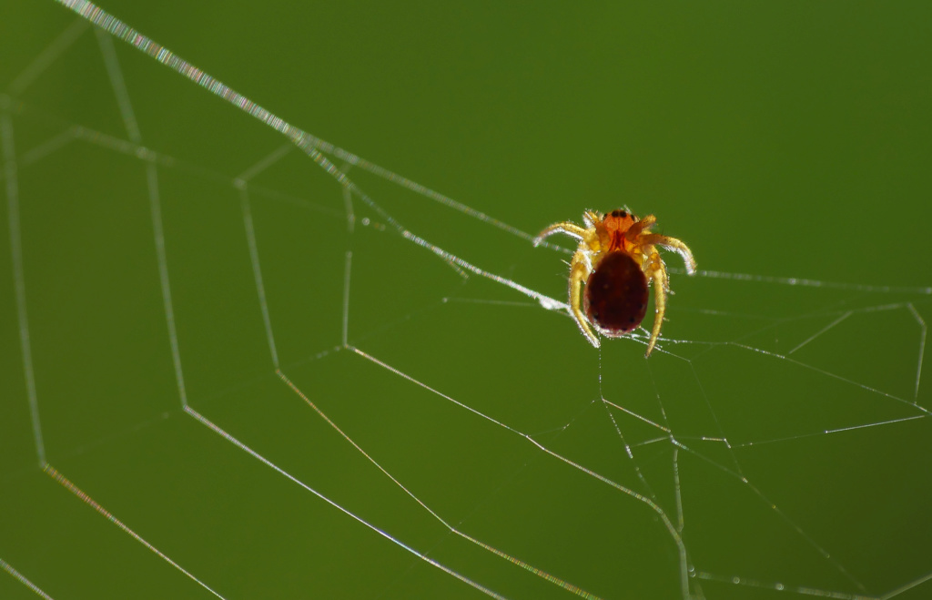 Micro Spider Micros11