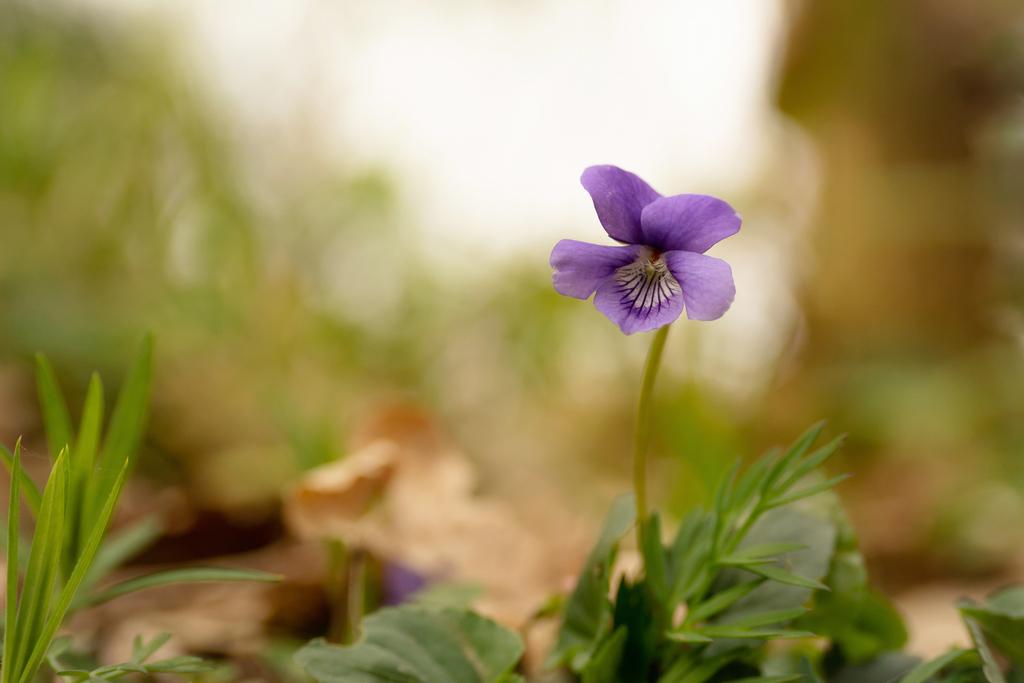 Violette Redim_11