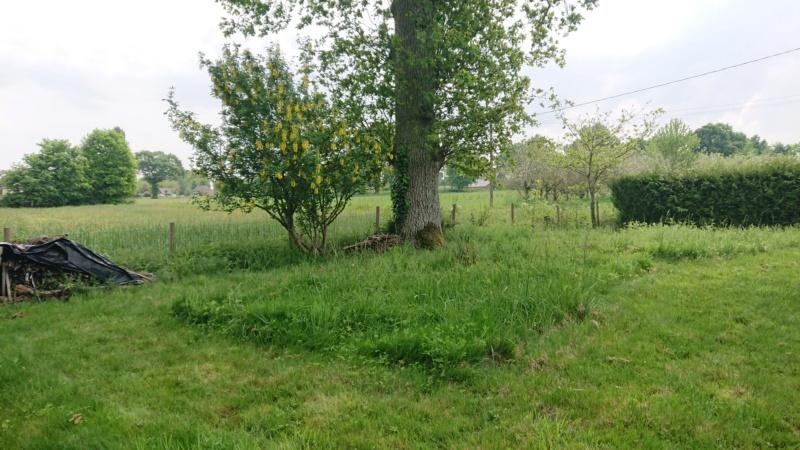 Jardin du mois de mai (enfin bientôt) Dsc_0710