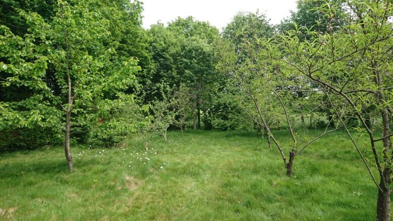 Jardin du mois de mai (enfin bientôt) Dsc_0711