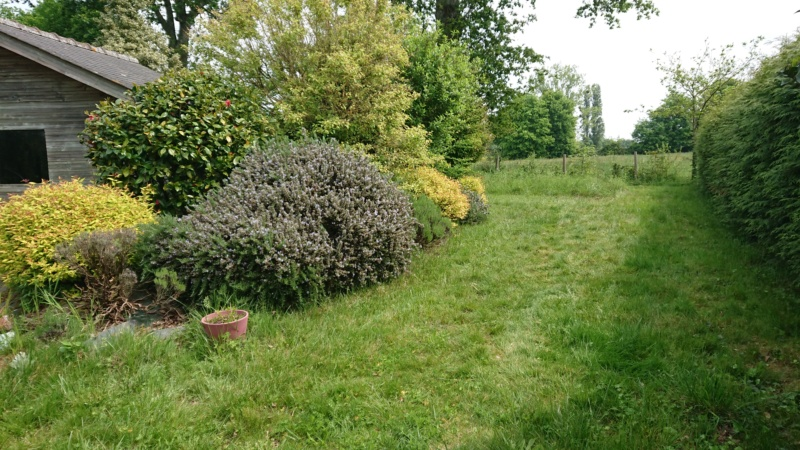 Jardin du mois de mai (enfin bientôt) Dsc_0712