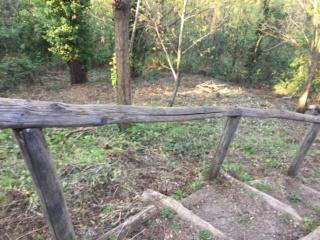 Consiglio dece per bosco scosceso più giardino 89a16010