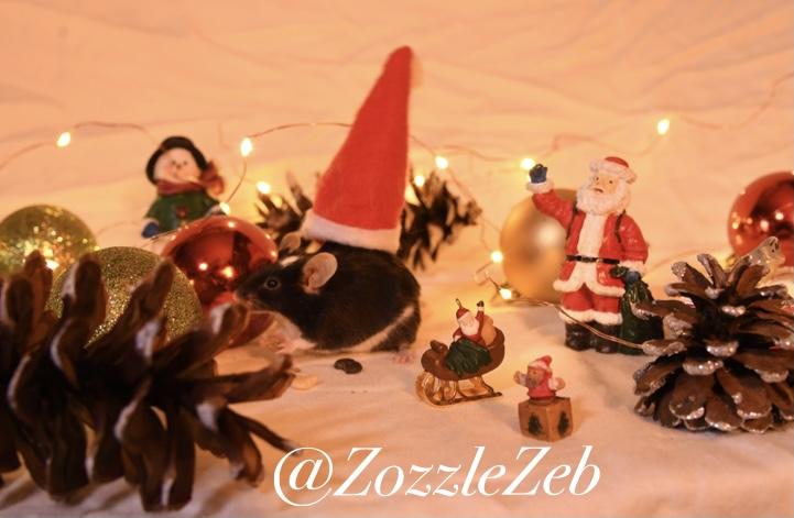 2 Days Late Christmas Photoshoot Photos! Img_2110