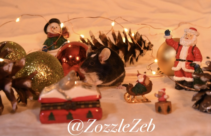 2 Days Late Christmas Photoshoot Photos! Img_2111