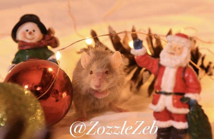 2 Days Late Christmas Photoshoot Photos! Img_2112