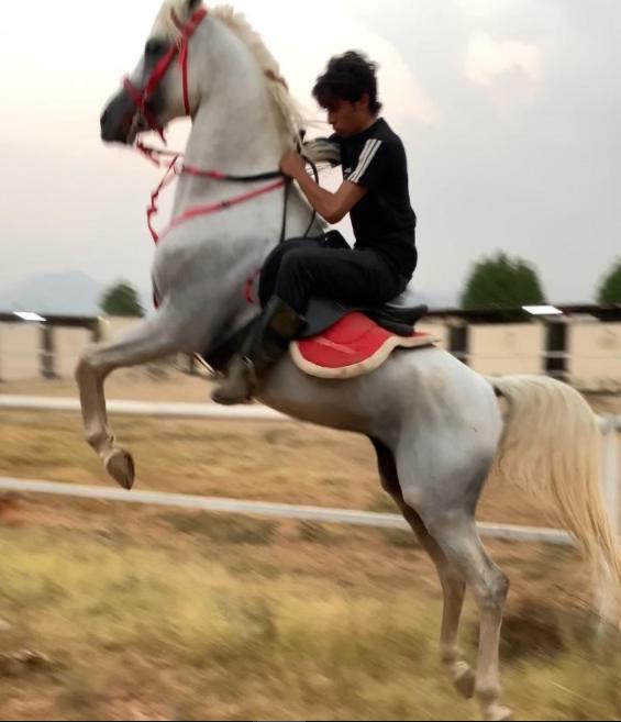 للبيع حصان فاخر واهو بسعر السوق 12010