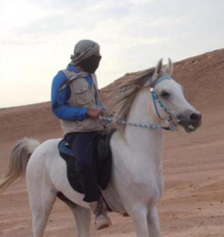 حصان واهو فاخر مصري جميل وانتاجه فاخر 14110
