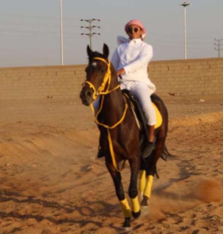 للبيع حصان عربي له مستقبل بالسباقات والانتاج في تبوك 14210