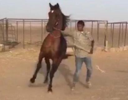 للبيع حصان شعبي سبوق ومحقق العمر فوق 7 2012