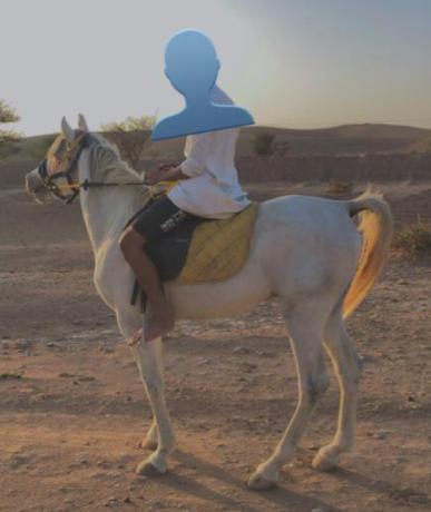 للبيع حصان مصري بيور 35810