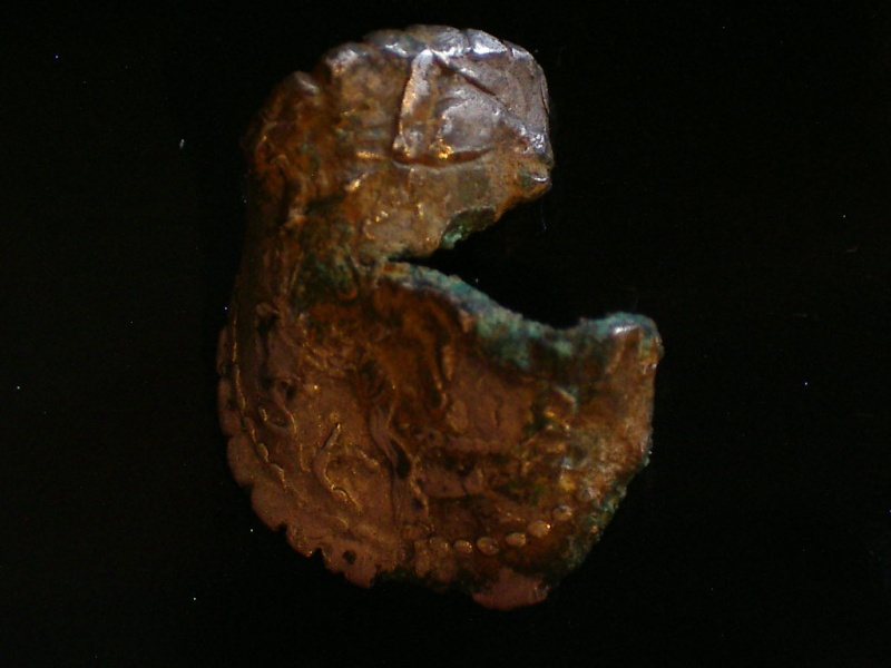 Les denier serratus fourrés Imgp6310