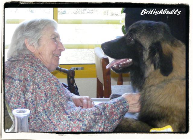 CAO et CHELSEA Estrela de 6 mois en maison de retraite hier Ponche16