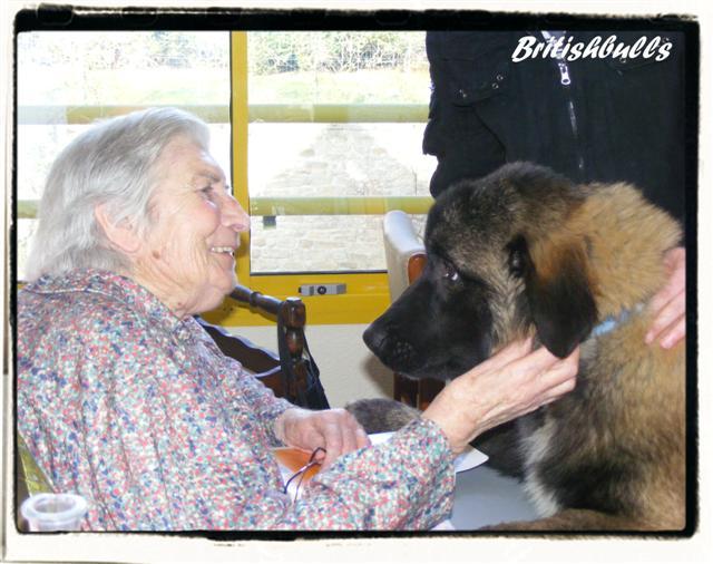 CAO et CHELSEA Estrela de 6 mois en maison de retraite hier Ponche17