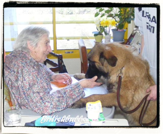 CAO et CHELSEA Estrela de 6 mois en maison de retraite hier Ponche18