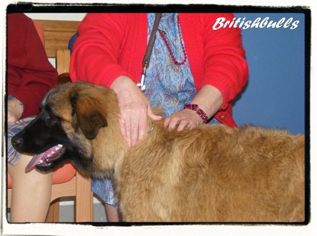 CAO et CHELSEA Estrela de 6 mois en maison de retraite hier Ponche20