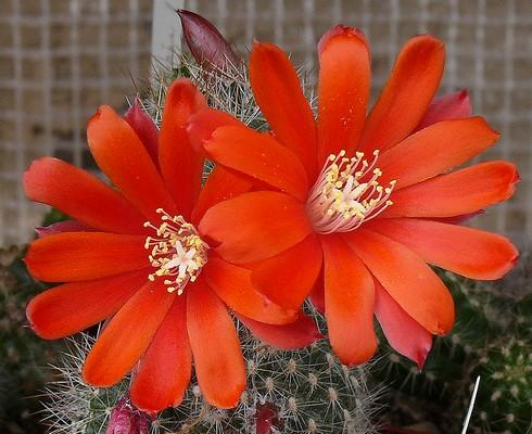 12 - Concours ... Le coeur des fleurs ... avril 2011 - Page 2 0001_010