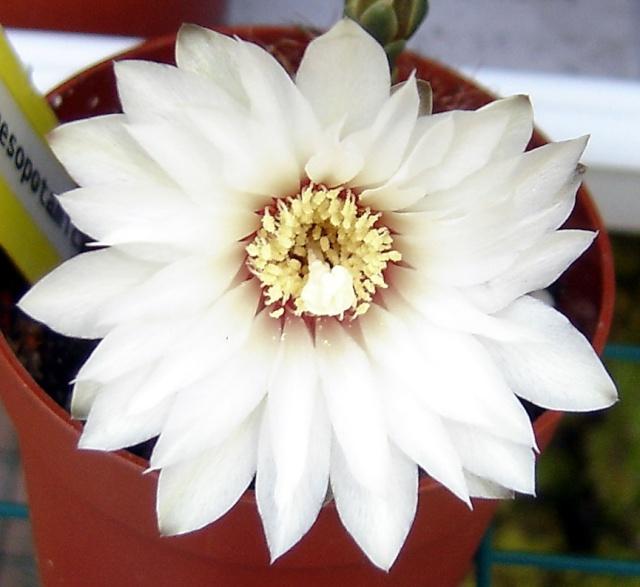 12 - Concours ... Le coeur des fleurs ... avril 2011 - Page 2 Pic_3310