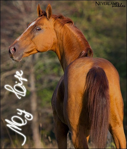 Chevaux de propriétaires [11 chevaux] My_lif10