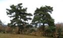 Le temps à Combadine au jour le jour en 2008 06010815