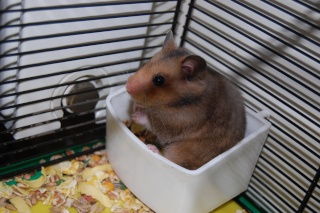 Chipette, hamsterette Dsc_0018