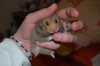 Chipette, hamsterette Dsc_0019