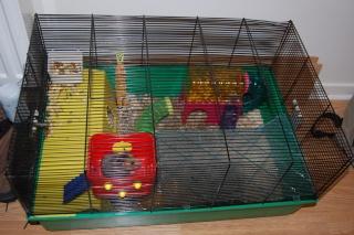 Chipette, hamsterette Dsc_0020