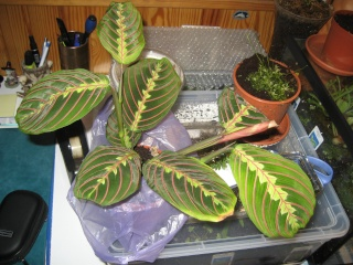 Comment relooker un terra à heterometrus spinifer Planto10