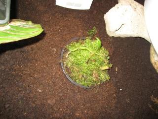 Comment relooker un terra à heterometrus spinifer Relook18
