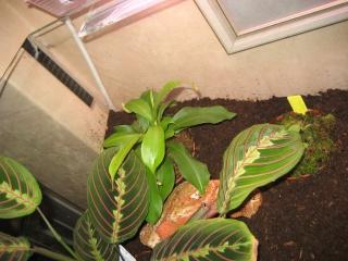 Comment relooker un terra à heterometrus spinifer Relook24