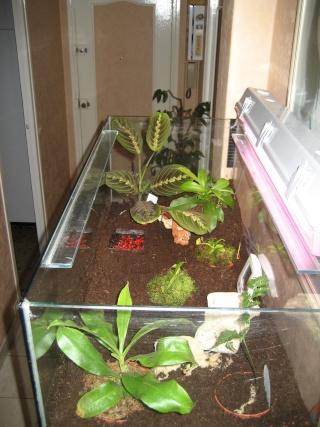 Comment relooker un terra à heterometrus spinifer Relook26