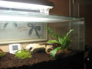 Comment relooker un terra à heterometrus spinifer Relook29