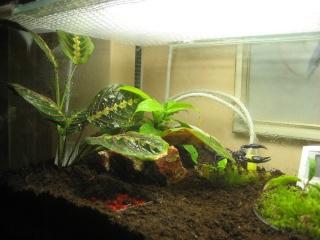 Comment relooker un terra à heterometrus spinifer Relook30