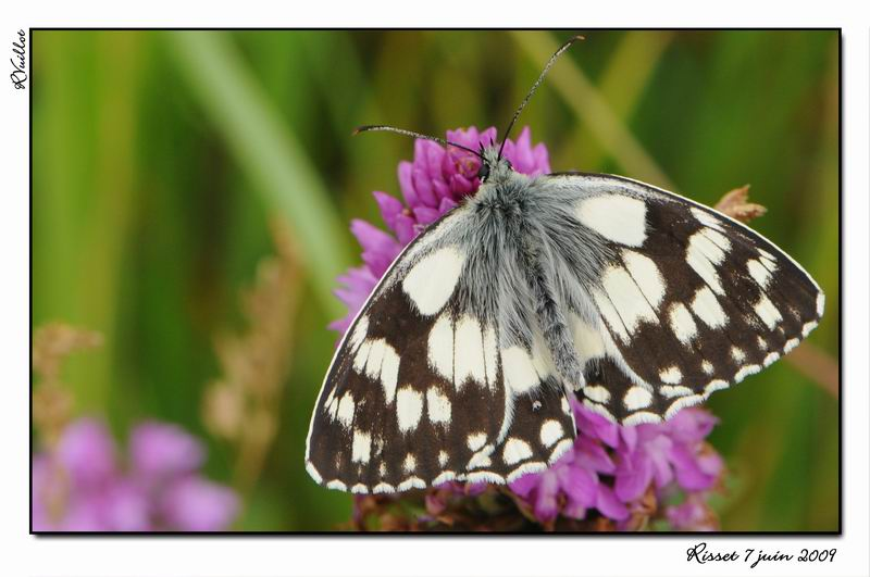 orchidees et papillons 09-06-10