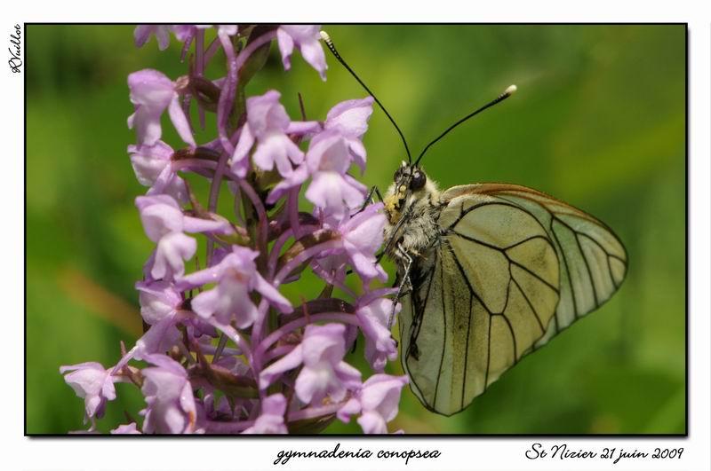 orchidees et papillons 09-06-11
