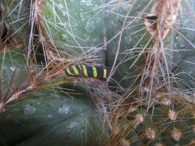 encore un autre insecte de Lorette Bichit11