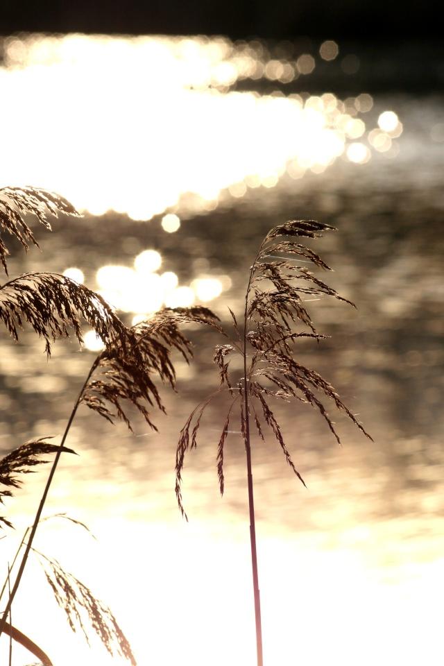 Lac de sologne Img_4713