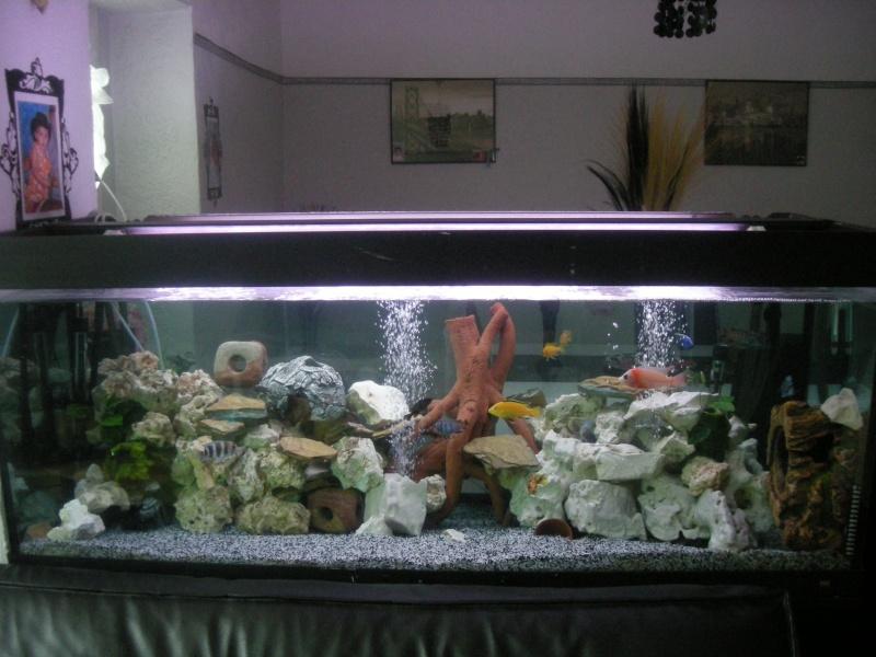voila mon aquarium 450 litres  F_00110