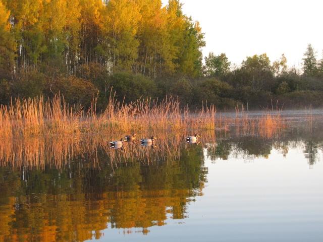 Concours photo du mois de novembre Image_32