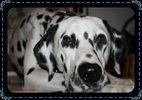 SOS vétérinaire 55512