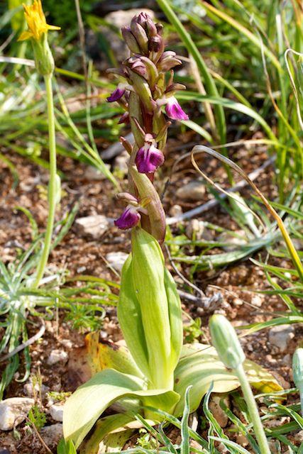 HERAKLEIA : un paradis pour orchidophiles Sans_t14