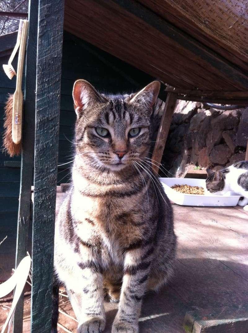 Perdu Tigrou, chat mâle tigré castré, Villeneuve Loubet (06) Img_0110