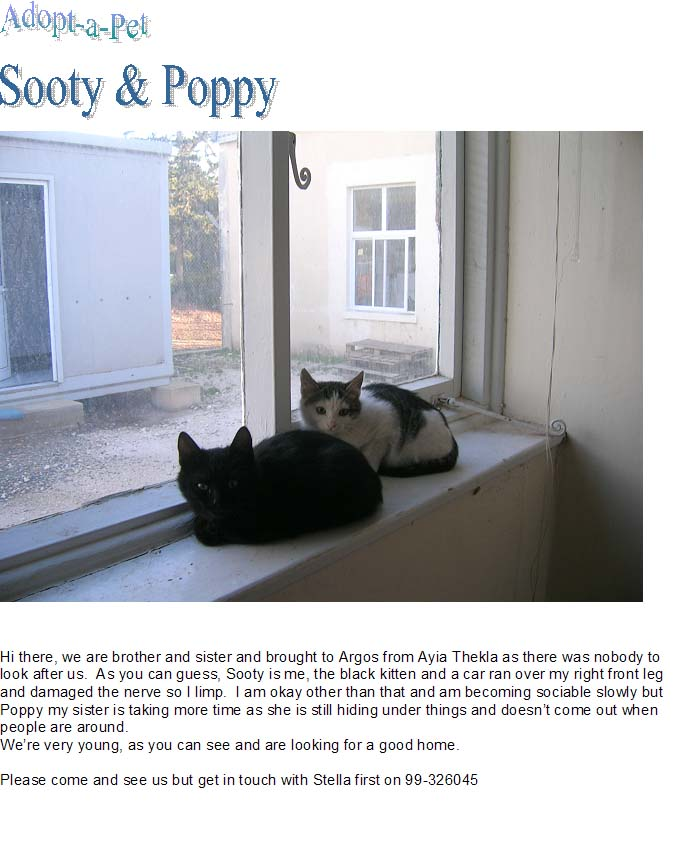 Sooty & Poppy need loving home Catsx210